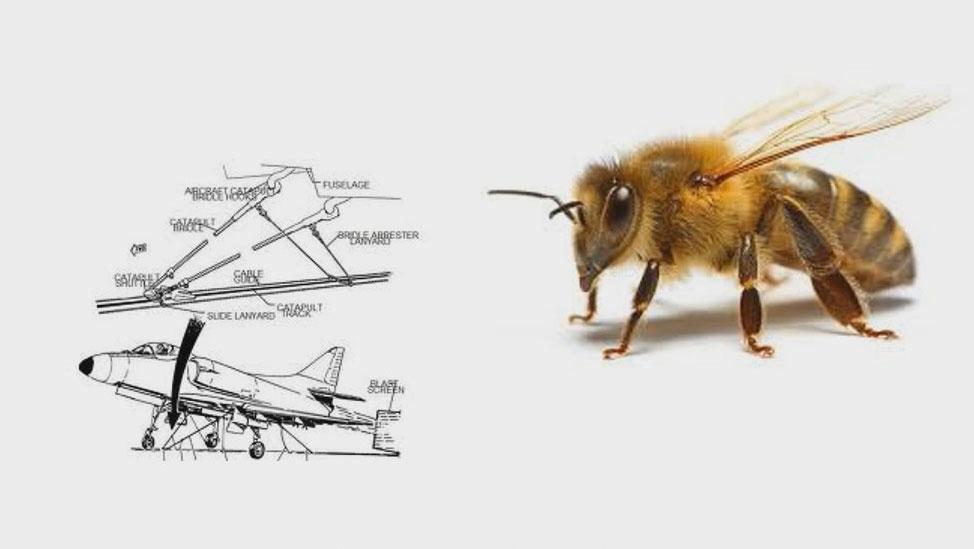 Koja je razlika izmedju pčele i aviona?